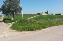 Terreno agricolo fronte-strada seminativo e uliveto di 3.75 ettari con acqua sia di acquedotto che di pozzo comprensivo di fabbricati