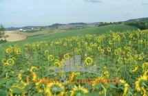 Terreno di 12 ettari con casolare - Immagine 5