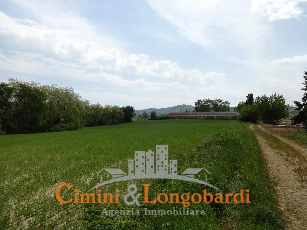 Terreno agricolo in posizione pianeggiante - Immagine 3