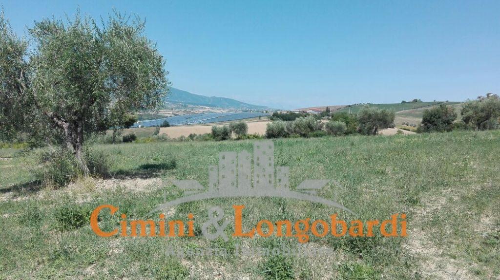 Terreno agricolo di mq 13.000 con possibilità di edificare casa singola - Immagine 3
