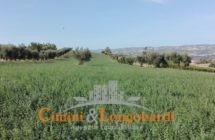 Terreno di mq 40.000 con grande casale e bellissima vista mare - Immagine 5