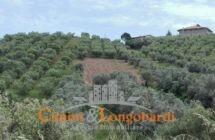 Terreno sulle colline di Tortoreto