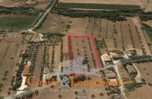 Terreno di mq 8.000 con Casolare da Ristrutturare.. - Immagine 3