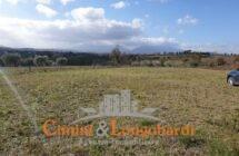 Terreno agricolo zona Santa Scolastica.. Corropoli - Immagine 1
