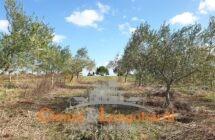 Terreno agricolo zona Santa Scolastica.. Corropoli - Immagine 2